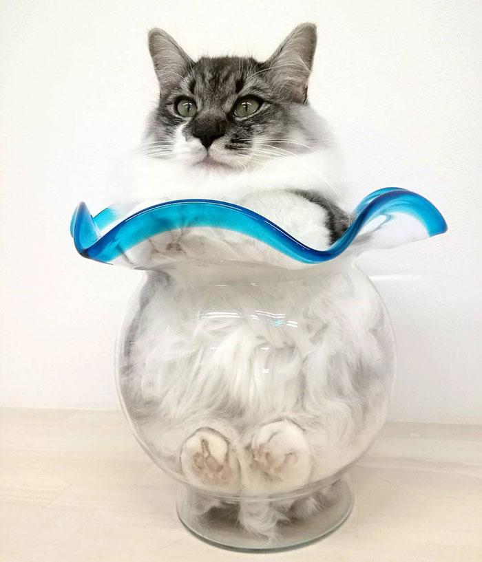 кот в вазе рис 3