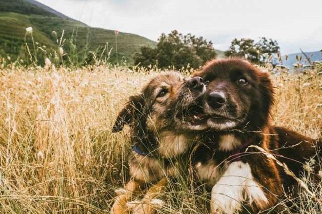 Собаки на природе