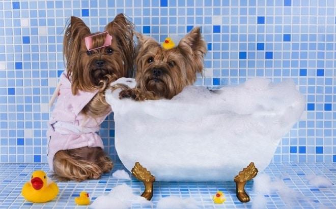 Собачки в ванной
