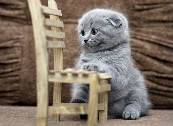 Котенок со стульчиком