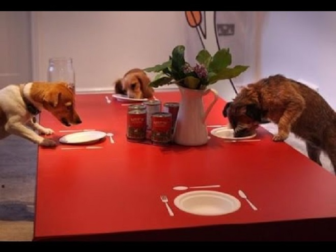 Собаки едят