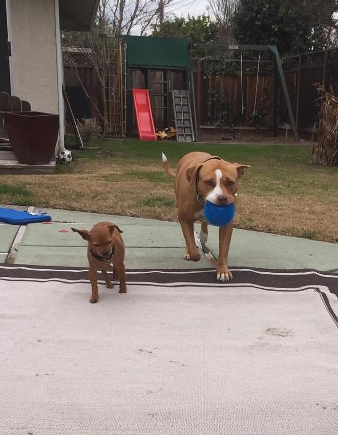 Собаки бегают