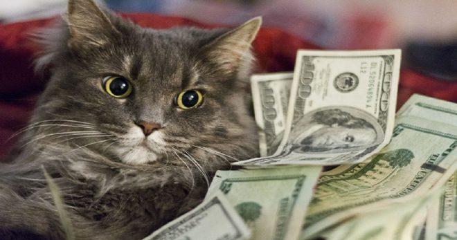 Кошка в долларах