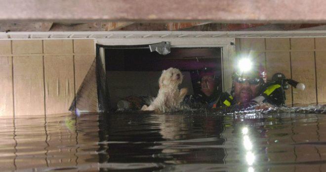 Спасатели нашли собаку