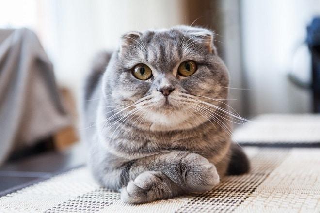 Кошка скрестила лапки