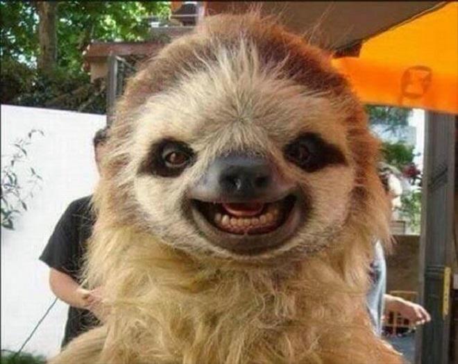 Ленивец улыбается