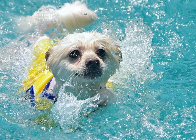 Собачка плывет