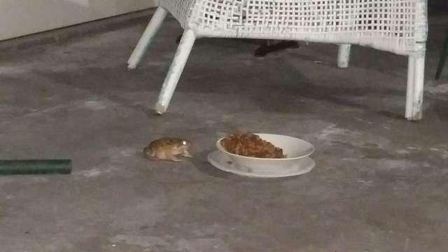 жаба и еда