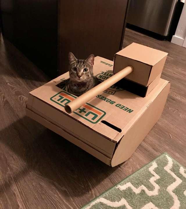 кот сидит в коробке рис 2
