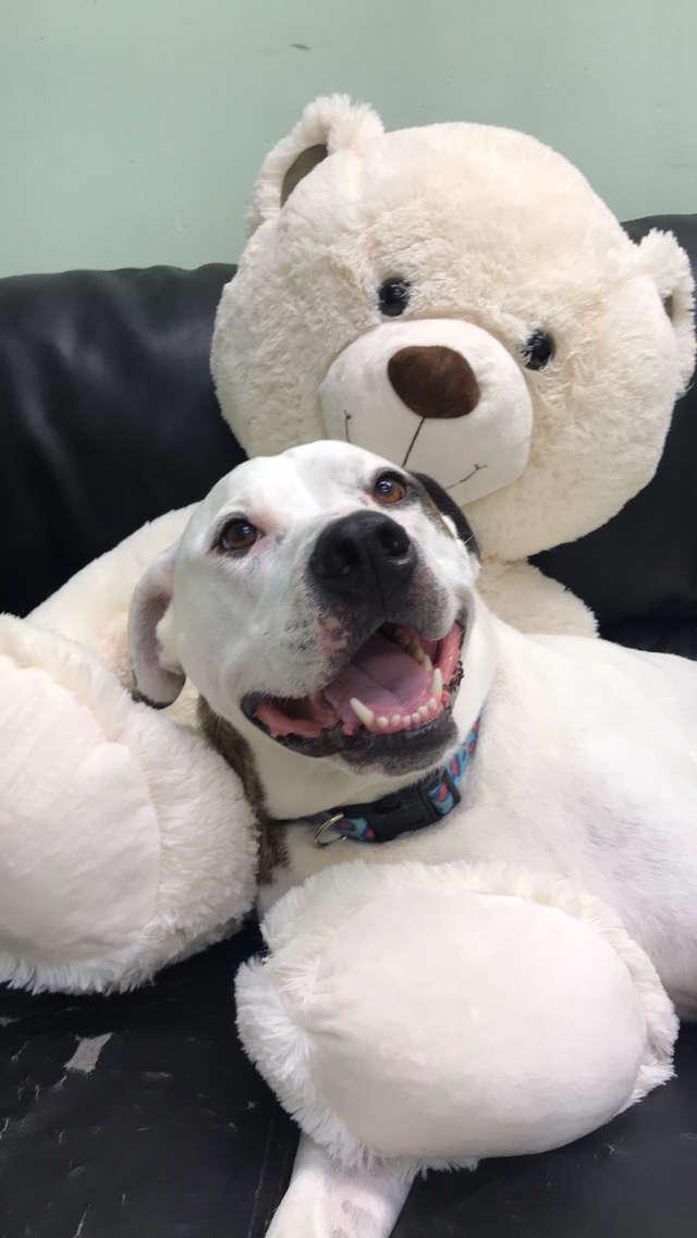 собака и медведь