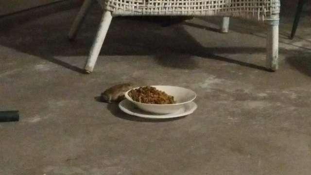 жаба ворует кошачью еду
