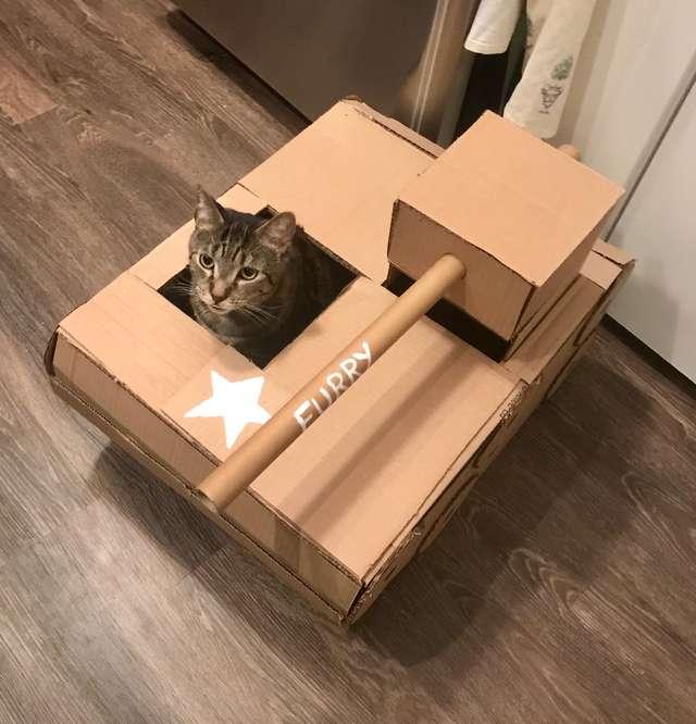 кот сидит в коробке рис 3