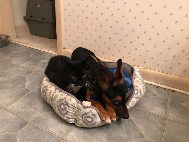 собака и котенок отдыхают