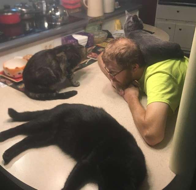 коты в доме