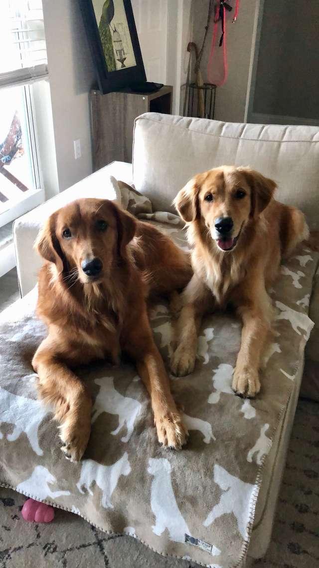 две собаки на кровати рис 2