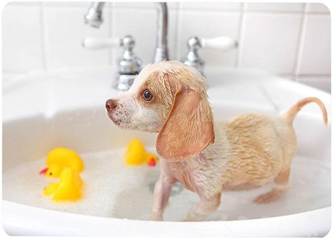 Щенок принимает ванну