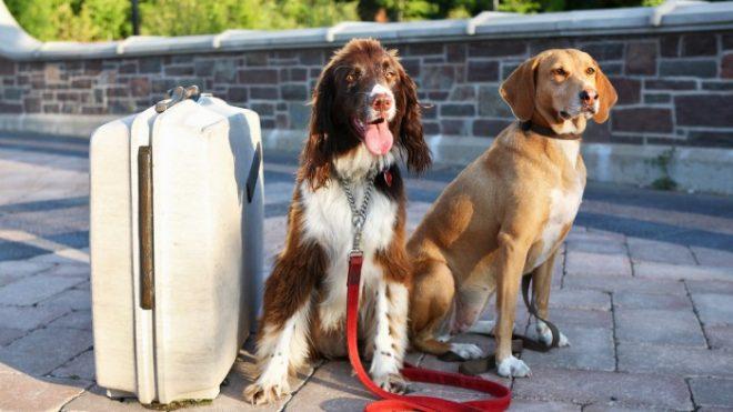 Собаки с чемоданом