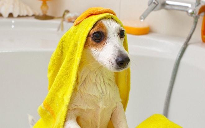 Собачка в полотенце