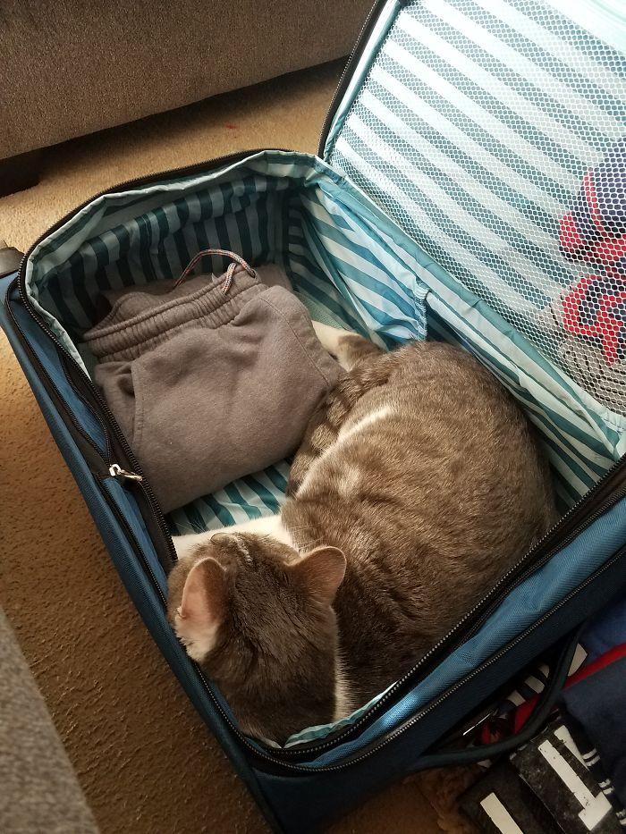 кот в чемодане с вещами