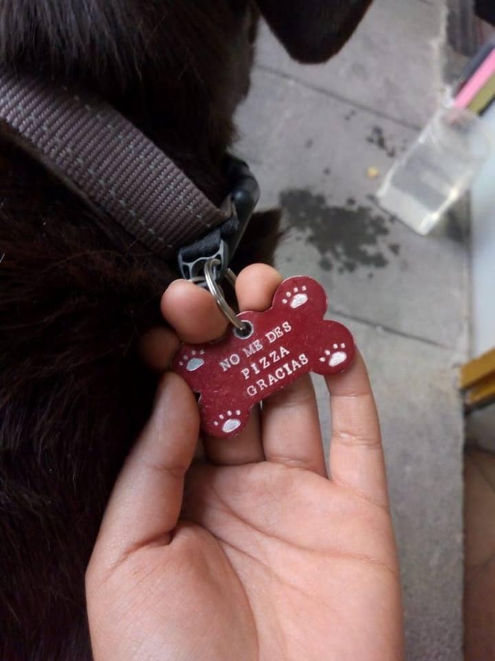 медальон на собаке