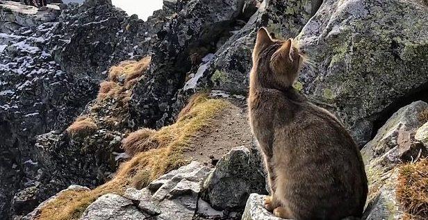 кошка в горах рис 2