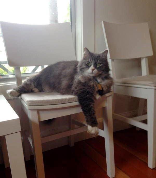 кот лежит на стуле