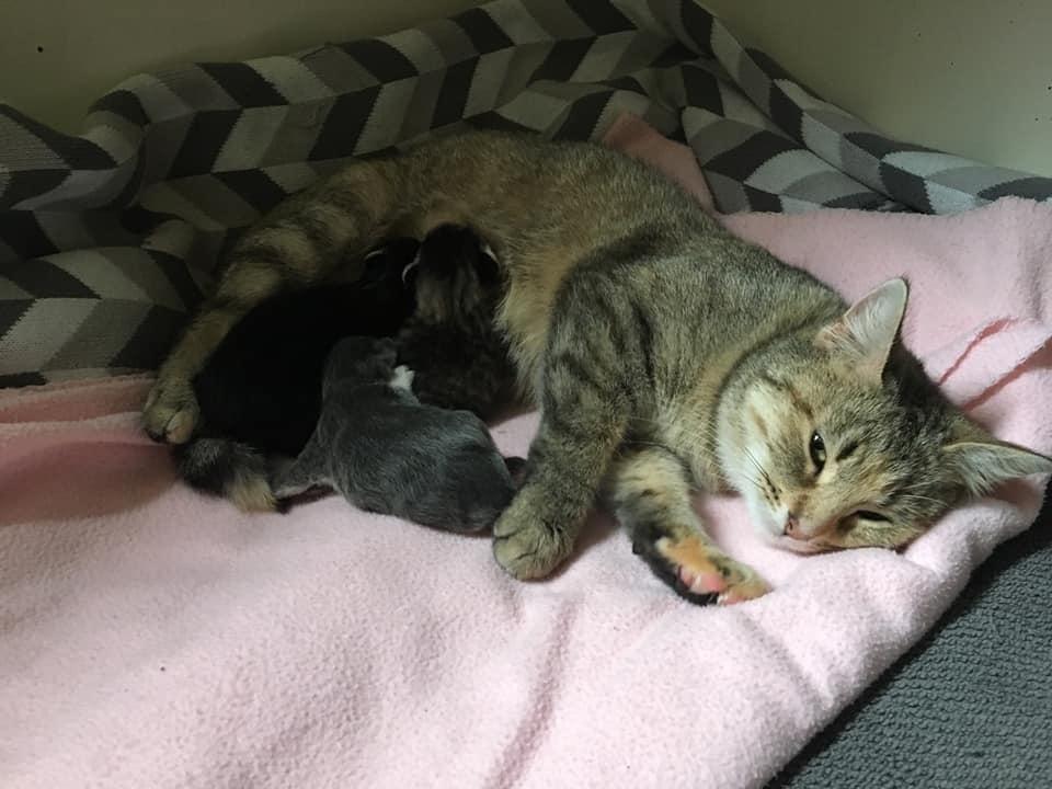 кошка и трое котят рис 2