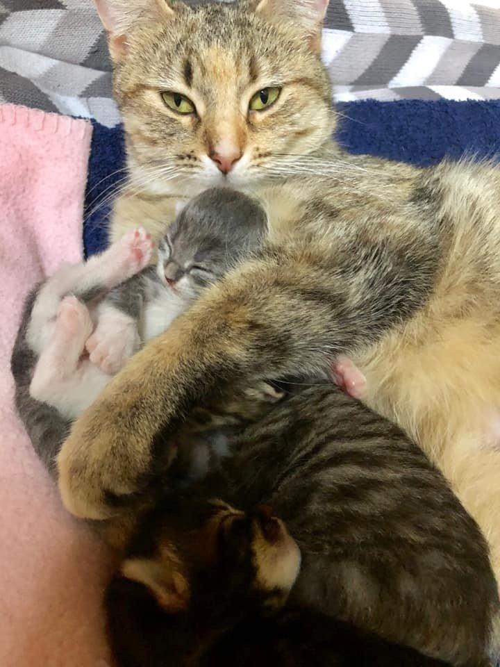 кошка и трое котят рис 3
