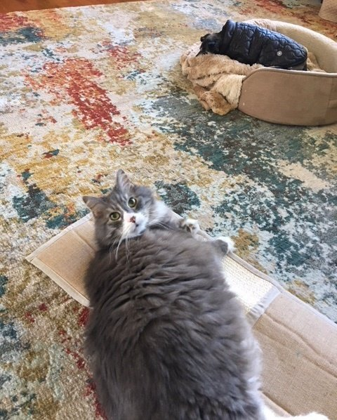 кот отдыхает рис 2