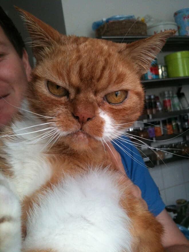 Злой кот рис 2