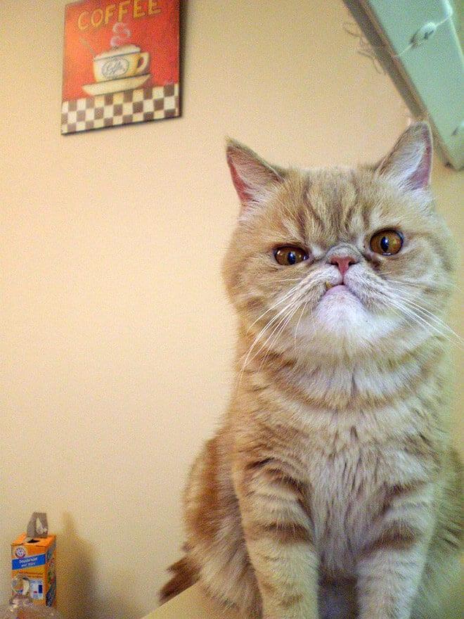 Недовольный кот