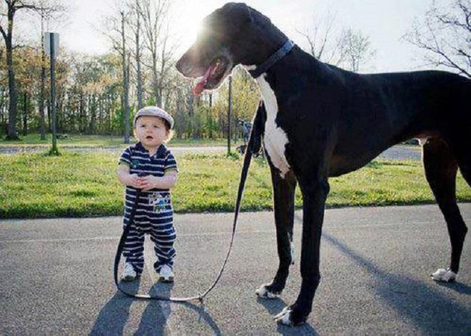Ребенок и Дог