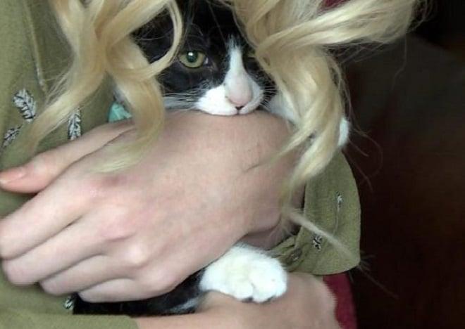 Кот и девушка
