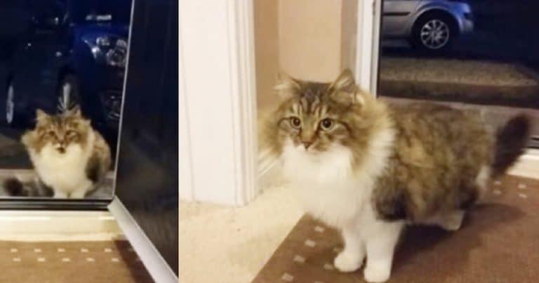 Cat in front of the door