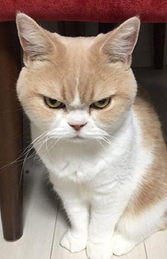 Озлобленный кот