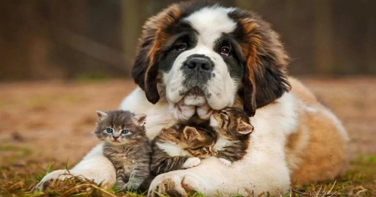 Собака с котятами