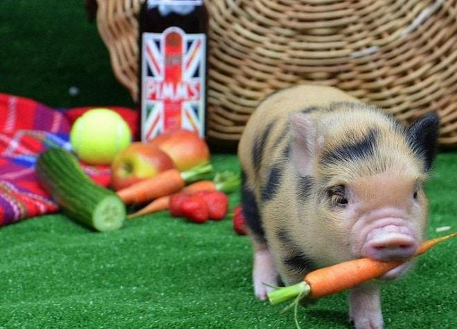 Свинка и овощи