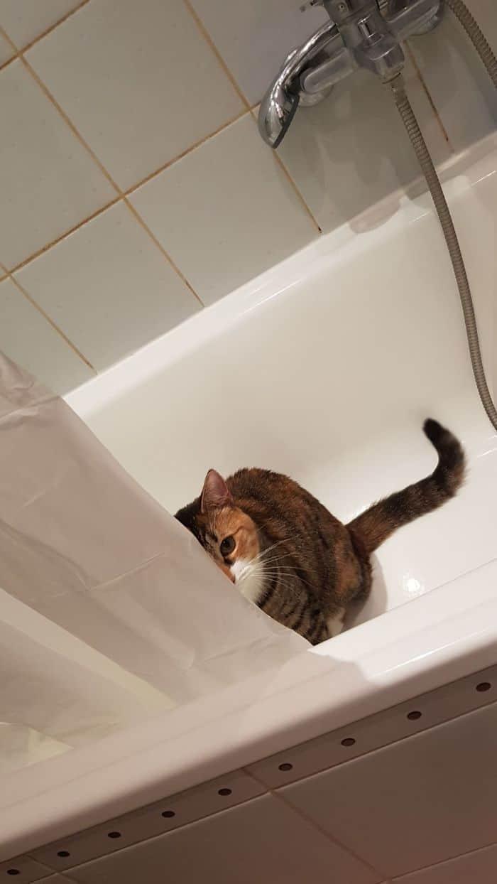 кот сидит в ванной