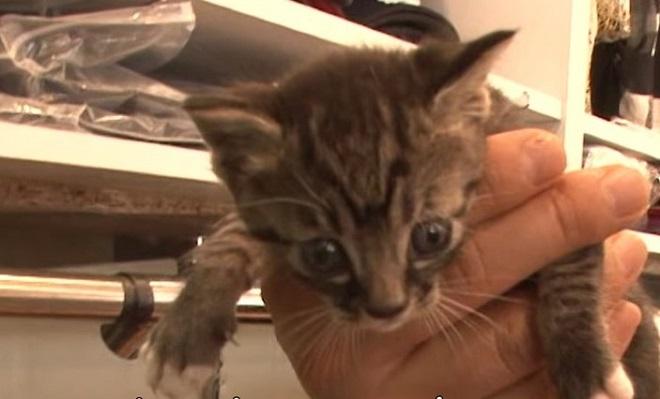 Полосатый котенк