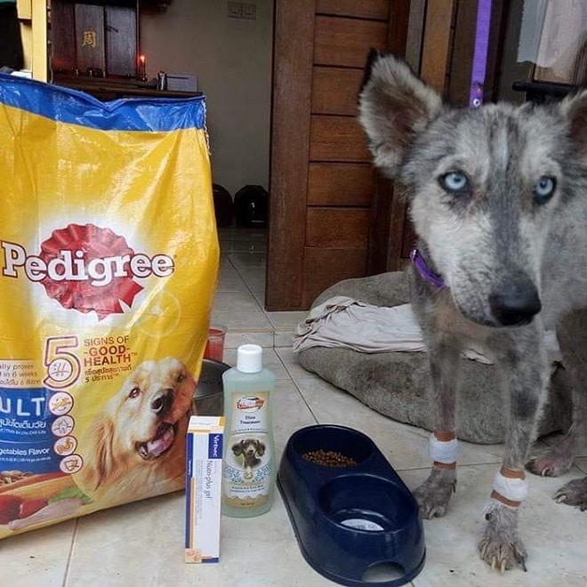 Собака рядом с кормом