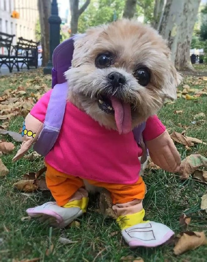 Собака с рюкзаком