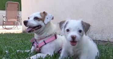 Mum and puppy
