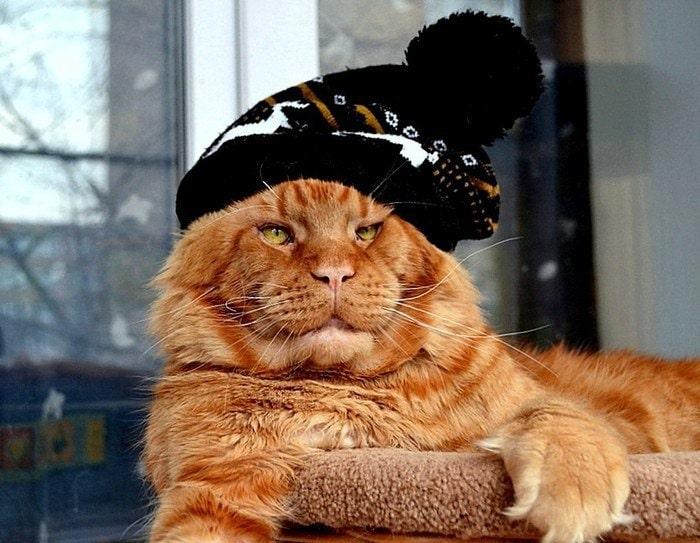 мейн-кун в шапке