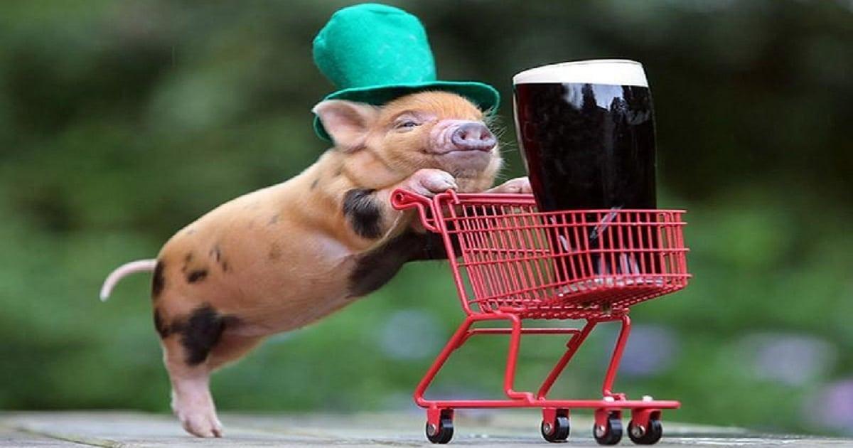 Свинка с тележкой