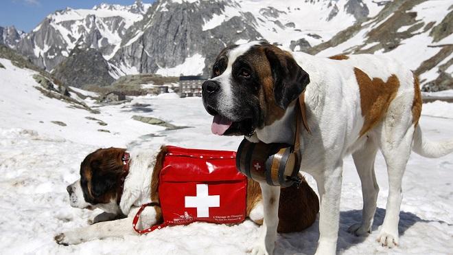 Пес в горах