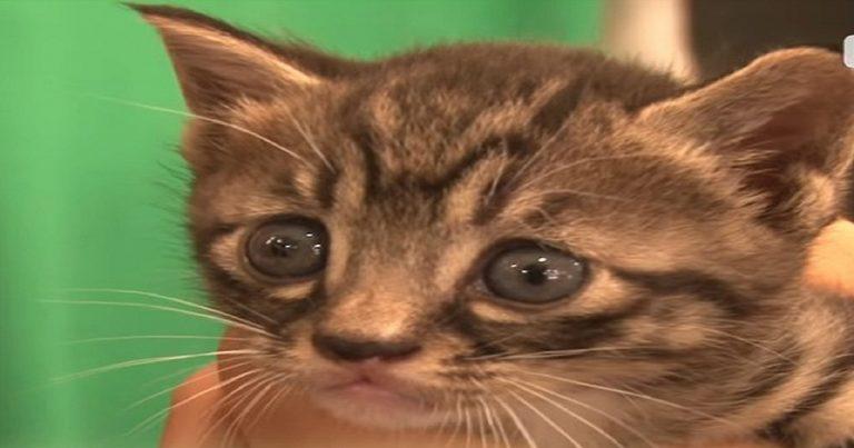Terrified kitten
