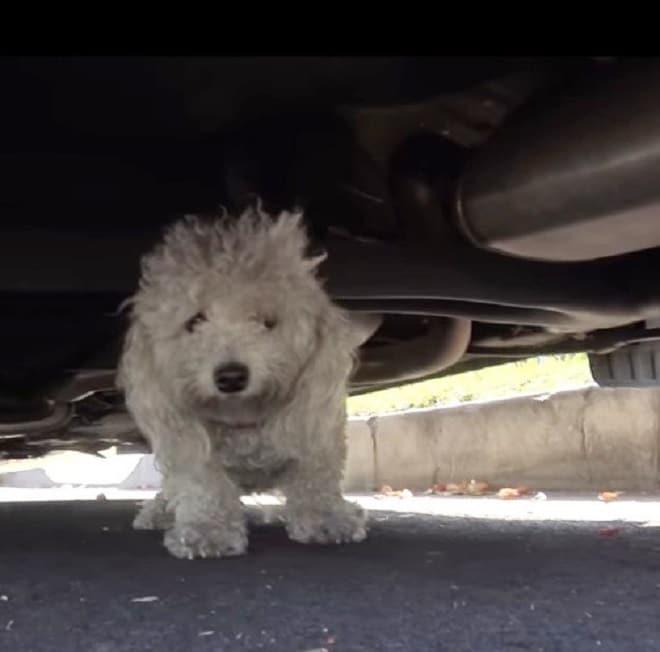Собака идет