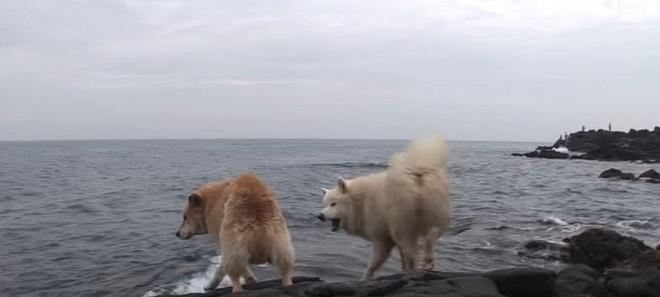 Собаки кусаются