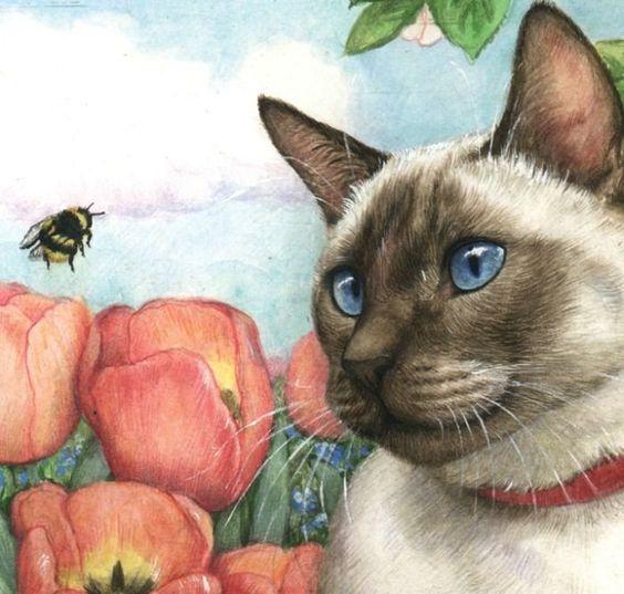 сиамская кошка рис 6