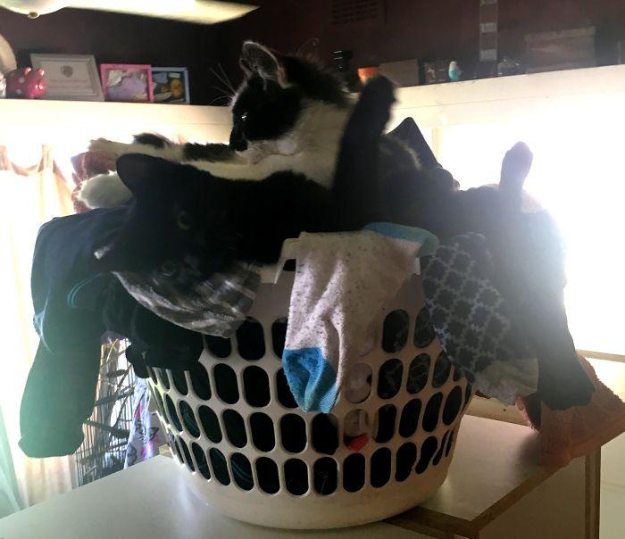 коты сидят в корзине с бельем
